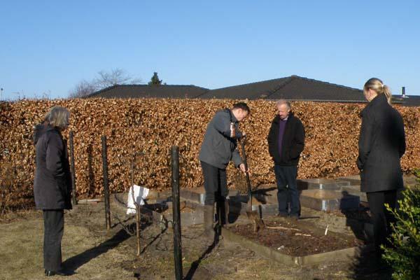 Rabarber graves op, så familien kan få lækre vinrabarber