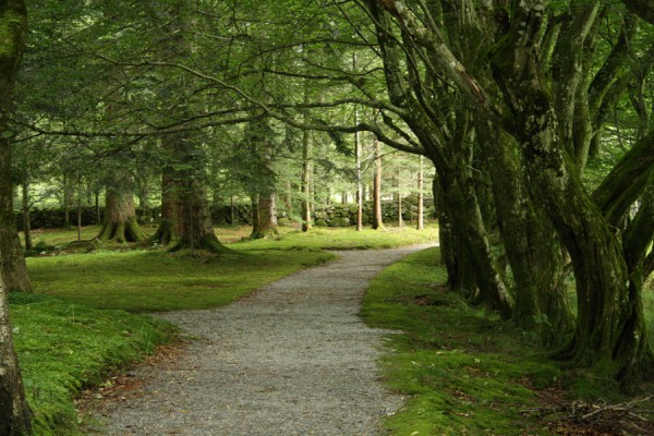 Det fortryllende landskab i skovhaven som næsten skaber sig selv i Norges fantastiske natur