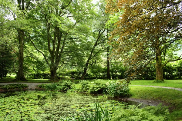 Haletudser klækkes i denne smukt beliggende sø i Baroniet.