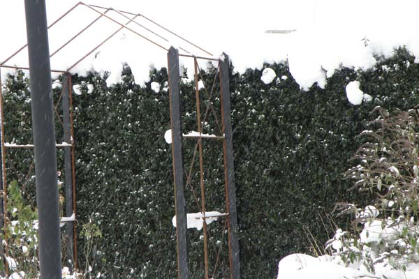 Rosenbuen i vinteren 2010/2011