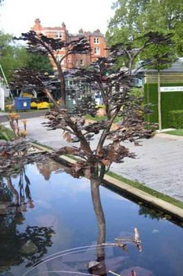 Titania - det rindende træ