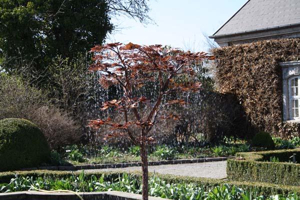 Forårsbillede af det rindende træ Titania, i den hvide have på Egeskov