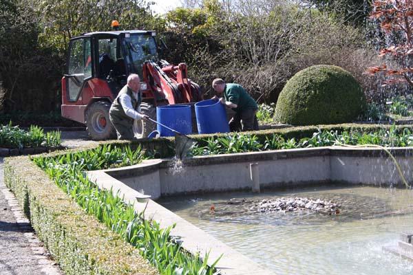 Karperne sættes ud igen, i bassinet i den hvide have