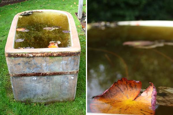 spejlbassin af gammelt vandtrug